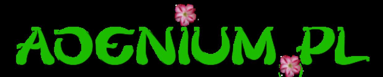 ADENIUM.PL – Adenium Róża Pustyni, mini Baobab, Najpiękniejsze Bonsai Świata!